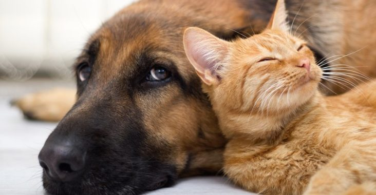Animali domestici fanno bene alla salute