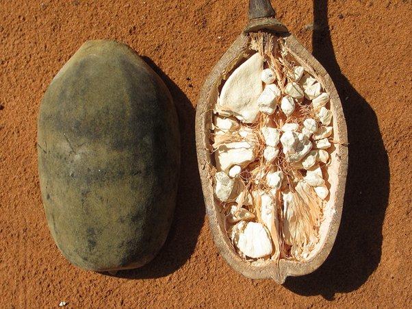 Frutto del baobab